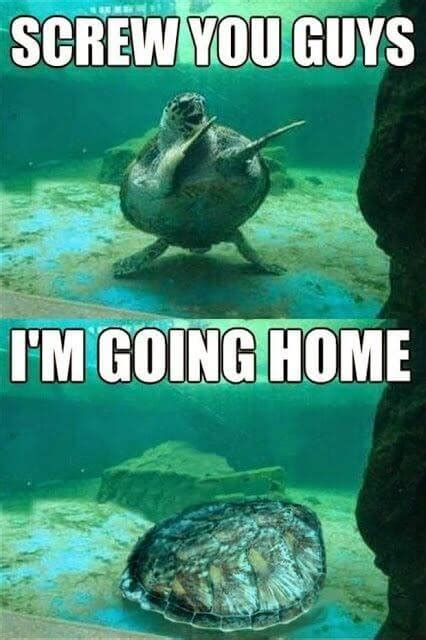 Turtle Meme - 29 hilarious turtle memes that are so funny they re actually dangerous