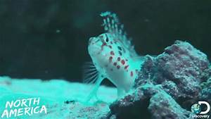 Belize Reef GIFs - Find & Share on GIPHY