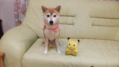 Husky Giphy Puppies Gifs