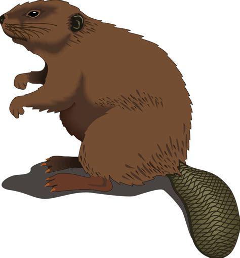 Beaver Clip Beaver Clip Royalty Free Animal Images Animal