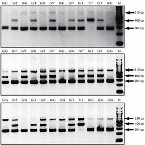 Sensitivity And Stability Test Of Our Db  Db Genotyping