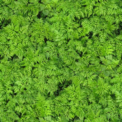 what is foliage green foliage texture foliage png opengameart org
