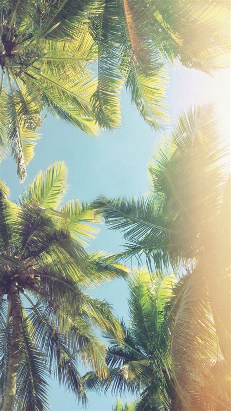 Palm Background Palm Trees Iphone Wallpaper Iphone Wallpapers