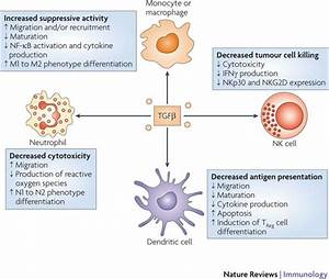 Effects of TGFβ on innate immune cells.Transforming ...
