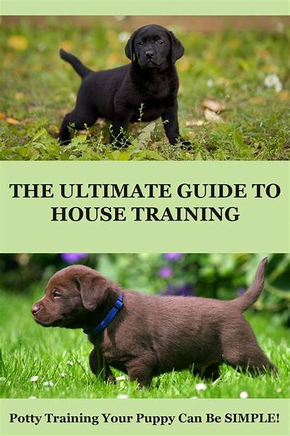 Puppy Training Potty Labrador Train Dog Trained