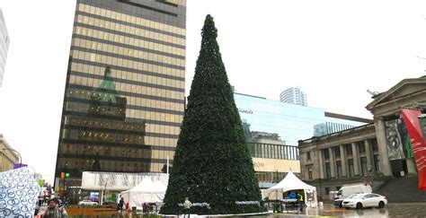at 80 ft vancouver s official christmas tree is 60