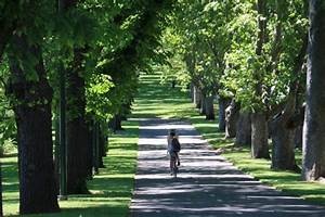Boulevard of trees in central Melbourne - ABC News ...