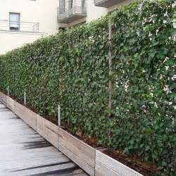screens from impact plants living fence panels hedging screens