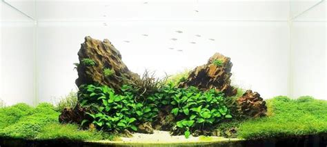 aquascaping with rocks archives the aquarium plant