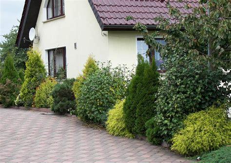 pflanzen für den vorgarten geeignete koniferen f 252 r den garten
