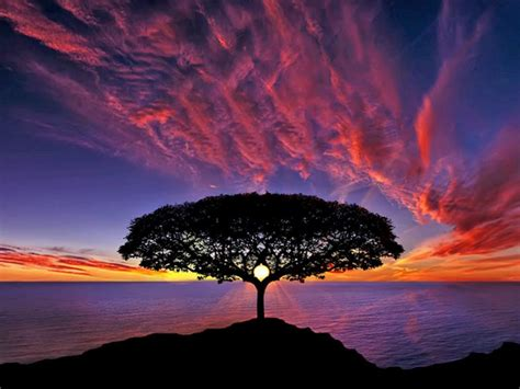 sunset tree silhouette blue sky red clouds ocean horizon