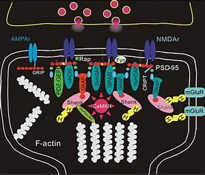 How Does Neuroplasticity Work  Jon Lieff  M D