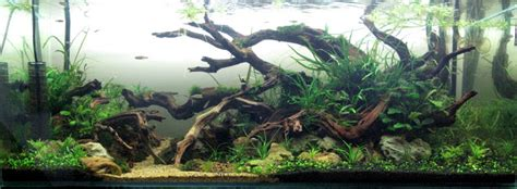 Wood For Aquascaping by The Soul Of Wood Ver 2010 Aquascaping Aquatic Plant
