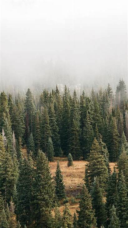 Iphone Wallpapers Nature Follow Might Preppy Forrest