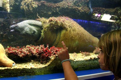 canet en roussillon entdeckenswert das aquarium praktische informationen