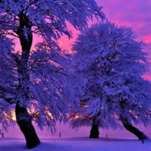 Purple Winter Sunset