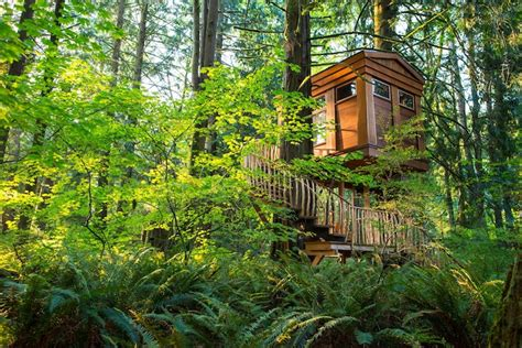 treehouse hotel washington rainforest hotel built in the trees tree house point captivatist