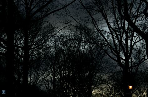 Download the imgur app and upload ones you have right to this subreddit. Dark trees HD Wallpapers - wallpaper202