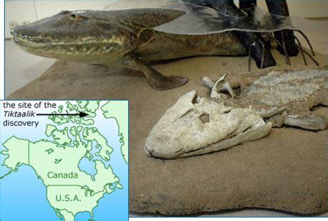 head   crocodile   gills   fish