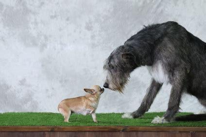 XXL Hundebetten für große Hunde HundebettenWeltde