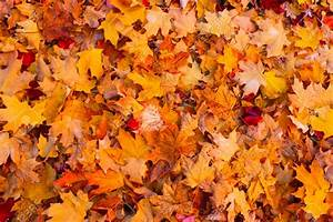 Leaf collection schedule announced | WHIZ News