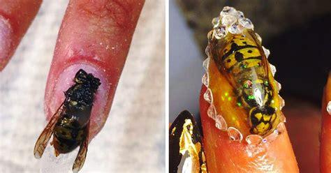 imagenes de unas  insectos muertos  usa  salon