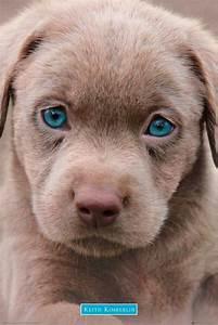 Hunde Sachen Kaufen : hundewelpen preisvergleich die besten angebote online kaufen ~ Watch28wear.com Haus und Dekorationen
