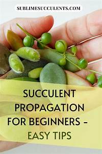 Pin On Succulent Guides