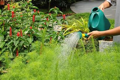 Gardening Myths Watering Water Plants Exposed Common