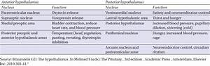 The Hypothalamic Nuclei And Their Functions