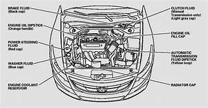 Honda Accord  Fluid Locations - Maintenance