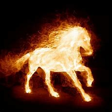 Year Of The Fire Horse  Horses And Other Beautiful