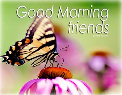 Morning Animated Quotes Greetings Butterfly Greeting Cards