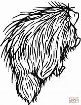 Porcupine Coloring Porcupines Pages North American Printable Drawing Clipart Categories Getcoloringpages Supercoloring sketch template