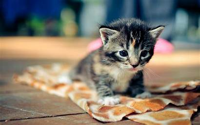Cat Definition Wallpapers Adorable Mobile Resolution Tags