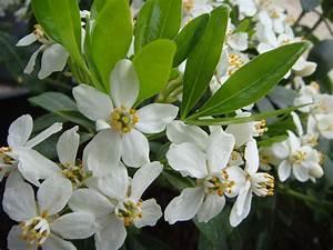 Arbuste Plein Soleil Longue Floraison : mon jardin terrasse quelles plantes pour quelle ~ Premium-room.com Idées de Décoration