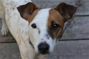 Spa Vannes Chien : chien dangereux amendes et sanctions ~ Dallasstarsshop.com Idées de Décoration
