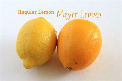 meyer lemon st germain meyer lemon cocktail