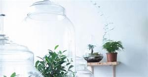 Acheter Terrarium Plante : terrarium la d coration v g tale qu 39 on adore marie claire ~ Teatrodelosmanantiales.com Idées de Décoration