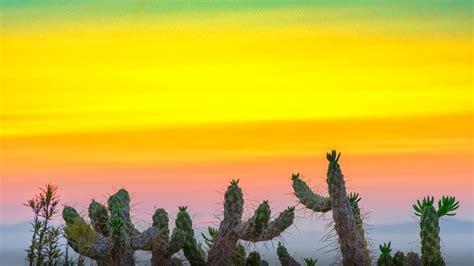 cactus  sunset wallpaper hd  mobile phone