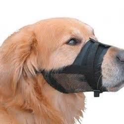 cat muzzle petco 296 best images about collars harnesses leashes