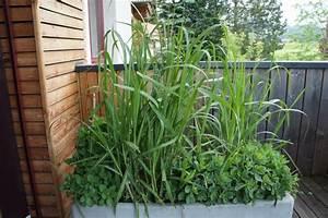 Balkon Sichtschutz Gras : sichtschutzhecke beim austrieb im fr hling f r terrasse ~ Michelbontemps.com Haus und Dekorationen
