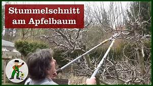 Apfelbaum Schneiden Wann : kirschbaum schneiden vorher nachher ~ A.2002-acura-tl-radio.info Haus und Dekorationen