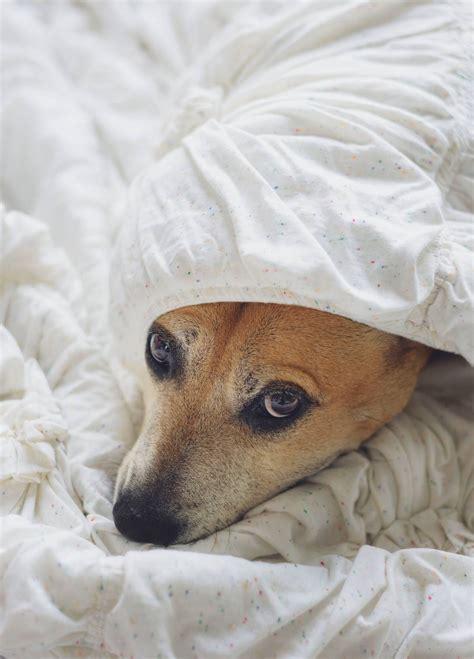 hat dein hund angst vor silvester hunde coach allgaeu