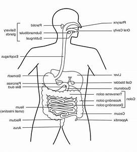 Health And Human Digestive System On Pinterest