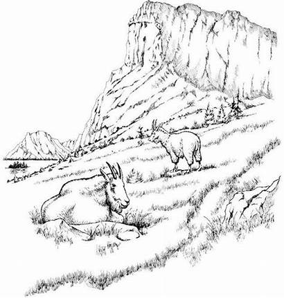 Coloring Realistic Mountains Goat Pages Mountain Scenery