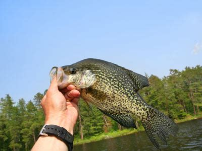 introduction  crappie fishing tips howstuffworks