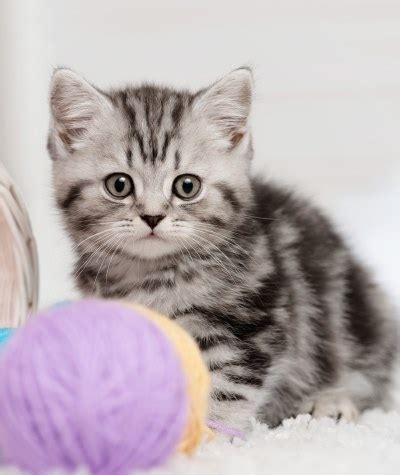 moms   cats names