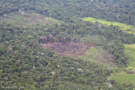 aerial view  rainforest cleared  agriculture