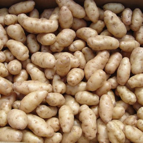what are seed potatoes 2016 newsletter 7 vegetables 101 with ed america s best flowers